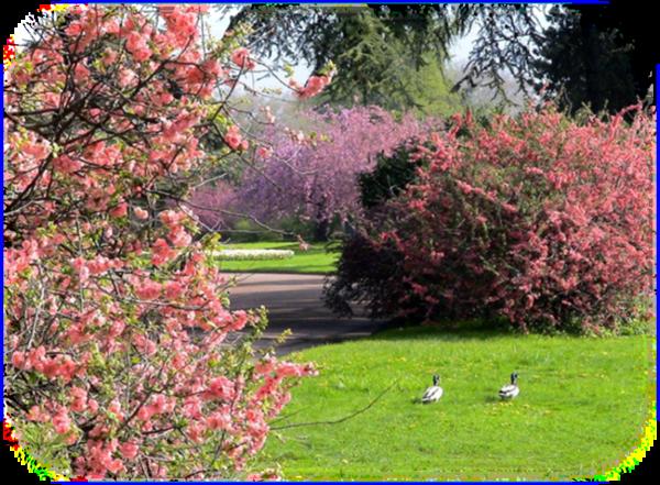 """Résultat de recherche d'images pour """"belle image printemps PNG"""""""