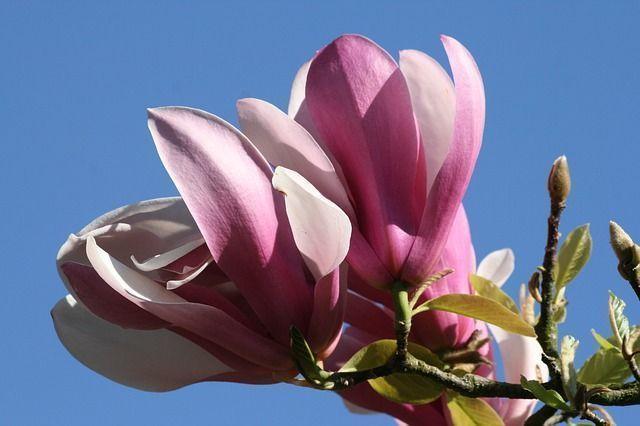 Belles Images De Fleurs